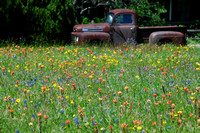 Pickup Truck and Wildflowers