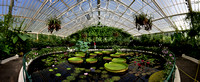 Waterlily House Panorama
