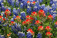 Wildflowers at Old Baylor Park, Independence